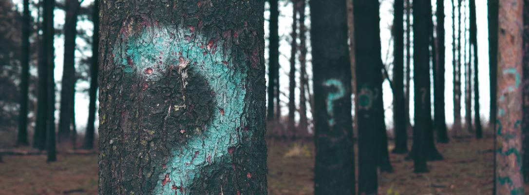 Frågetecken sprejat på träd